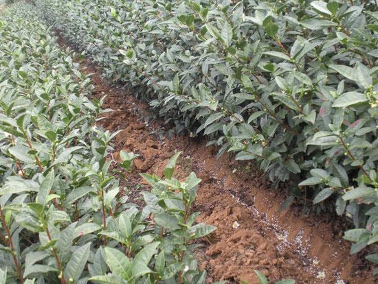 Sludge Charcoal Used in Agricultural Fertilizer